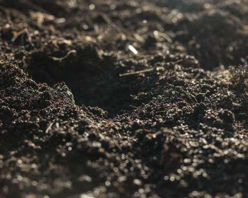 Bonterra soil