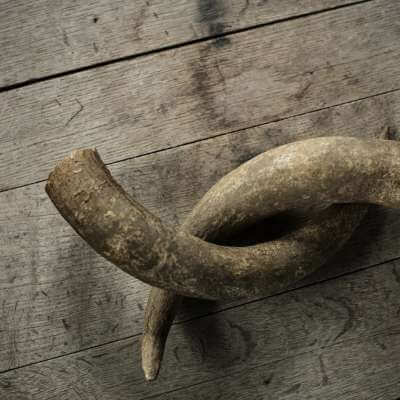 Animal horn decoration