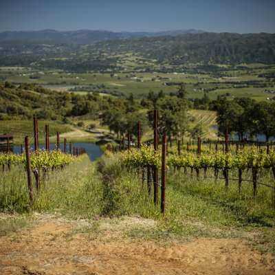 Bonterra Vineyard