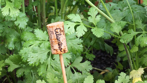 Plant-Name-Tags-Out-of-Corks