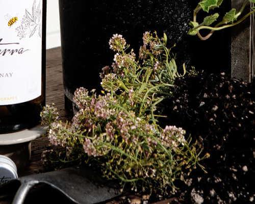 Organic herbs and Bonterra Chardonnay